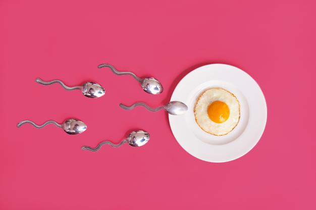Thụ thai và rụng trứng có liên quan mật thiết với nhau
