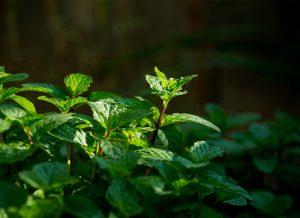 9 chất bảo quản tự nhiên thay thế Paraben