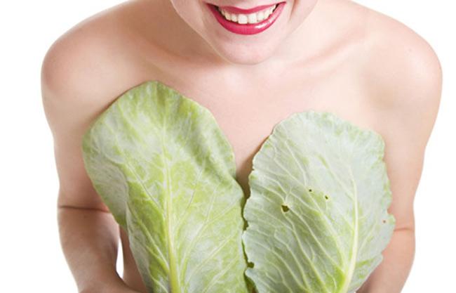 Bắp cải chứa lượng lớn Phytoestrogen giúp giảm tắc sữa